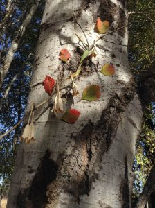 Nystrom's collage adorns a birch tree (artist photo)
