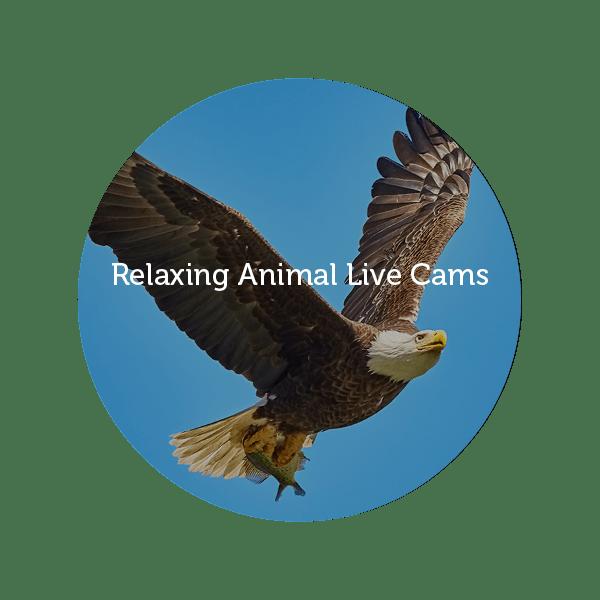 AnimalCam_button