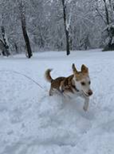 dog running through the snow