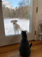 Dog staring at cat through a window