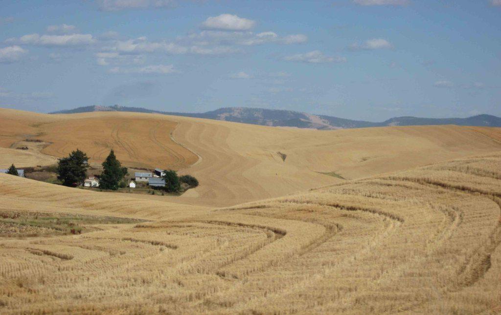 Eastern-Washington-Wheat-Farm