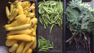 Squash, snap peas, and kale are pictured in separate storage containers.
