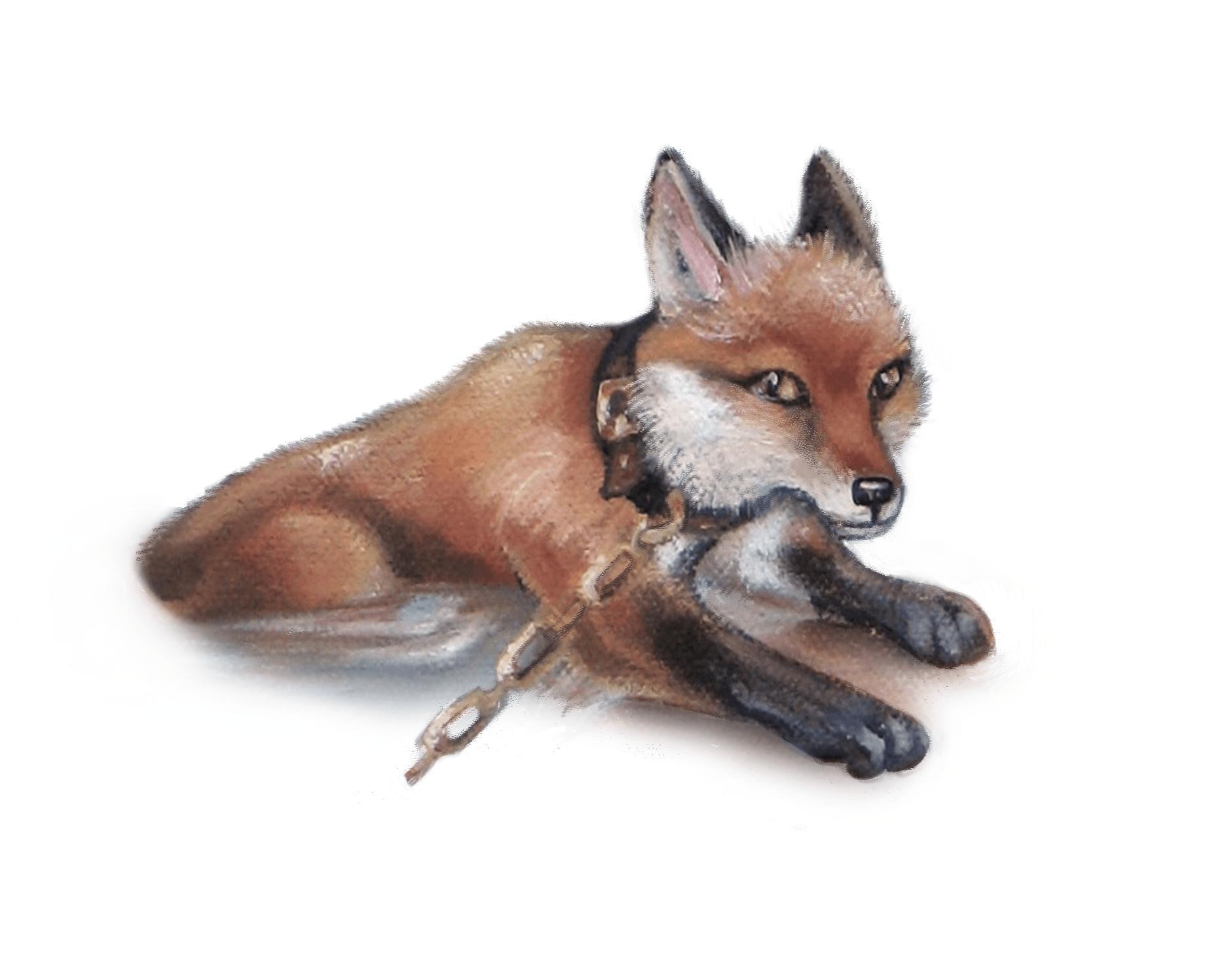 Fox icon colro