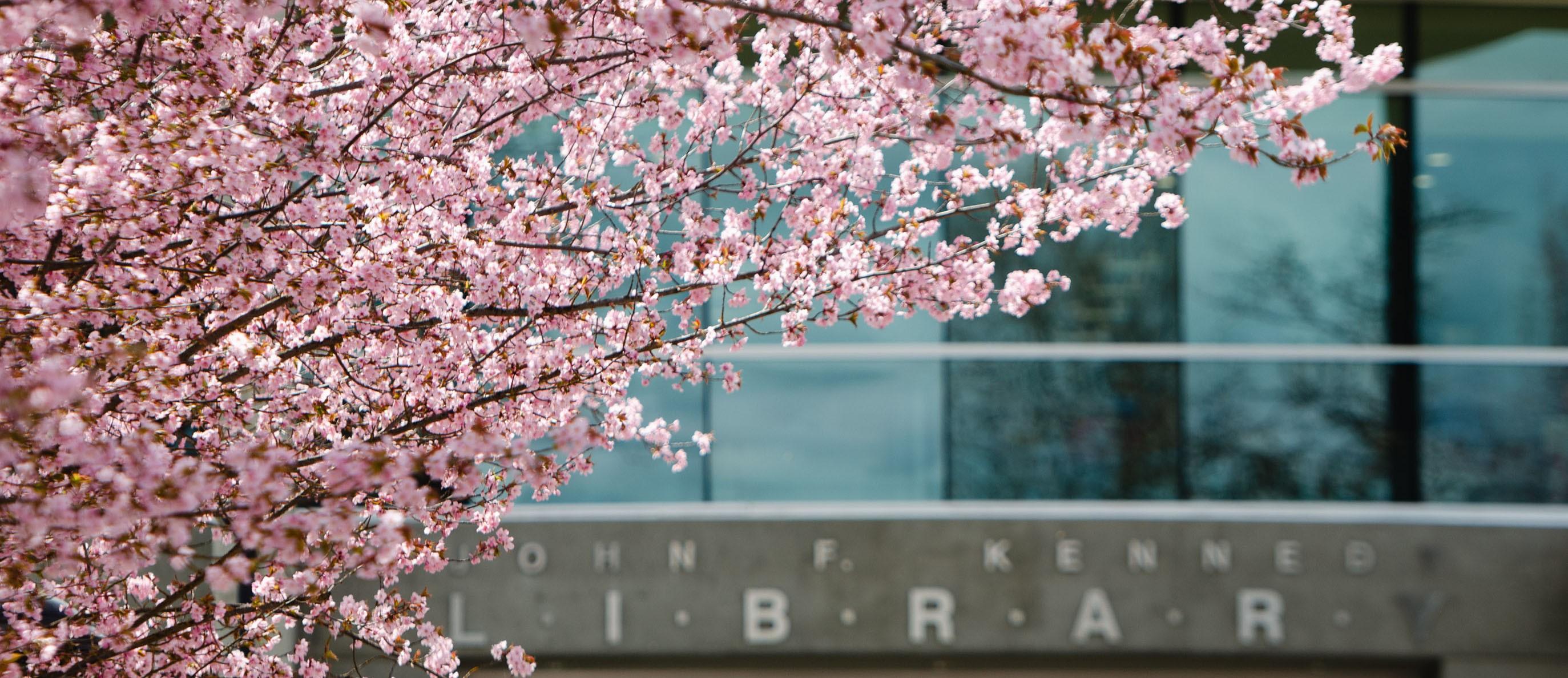 JFK Library Spring